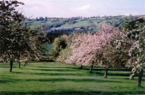 orchard_view-1